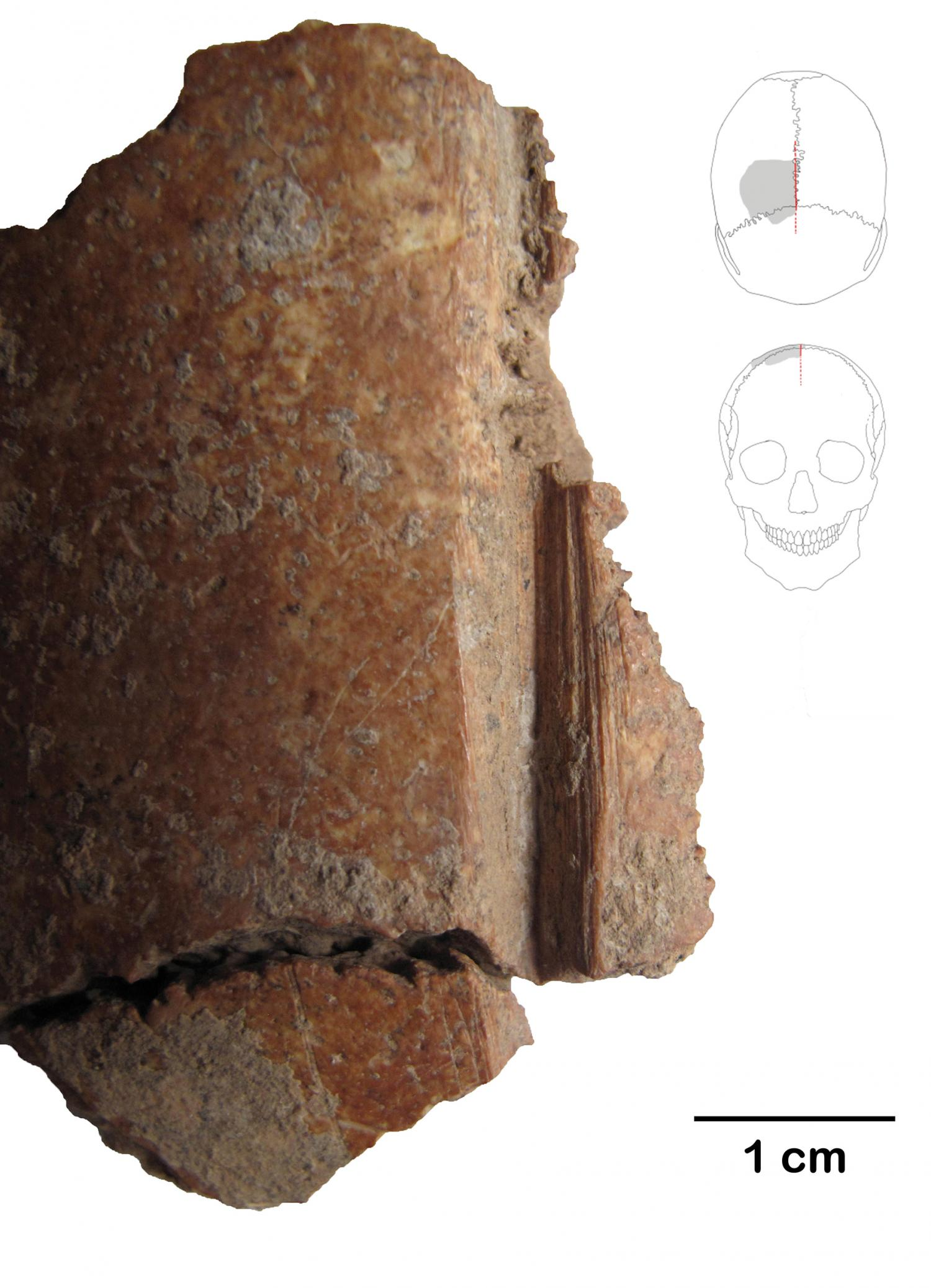 Skull fragments with carved long deliberate lines found