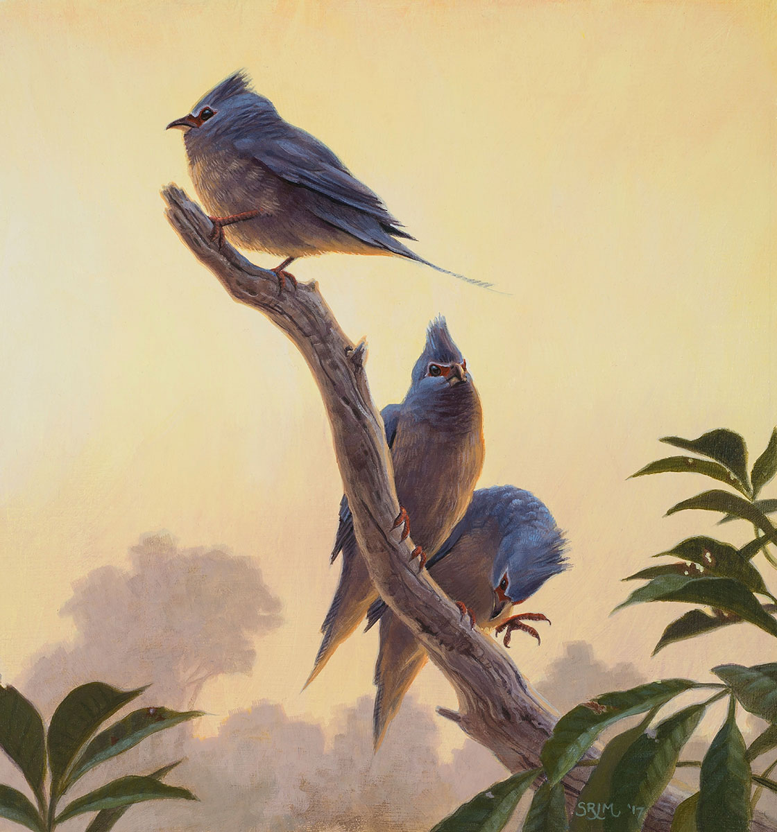 species of ancient bird discovered in new mexico