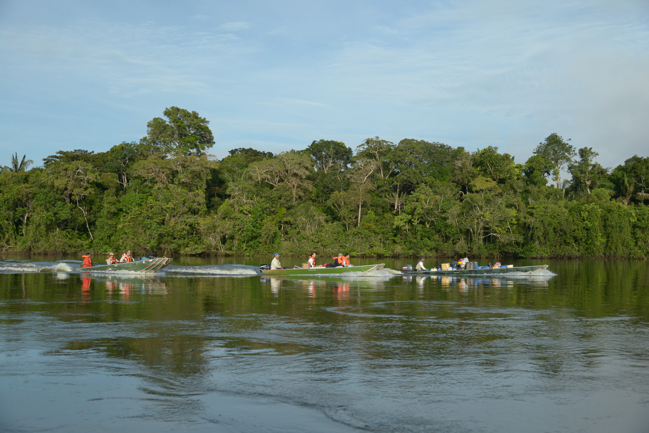 Study of the Amazon discovers 381 new species in two years