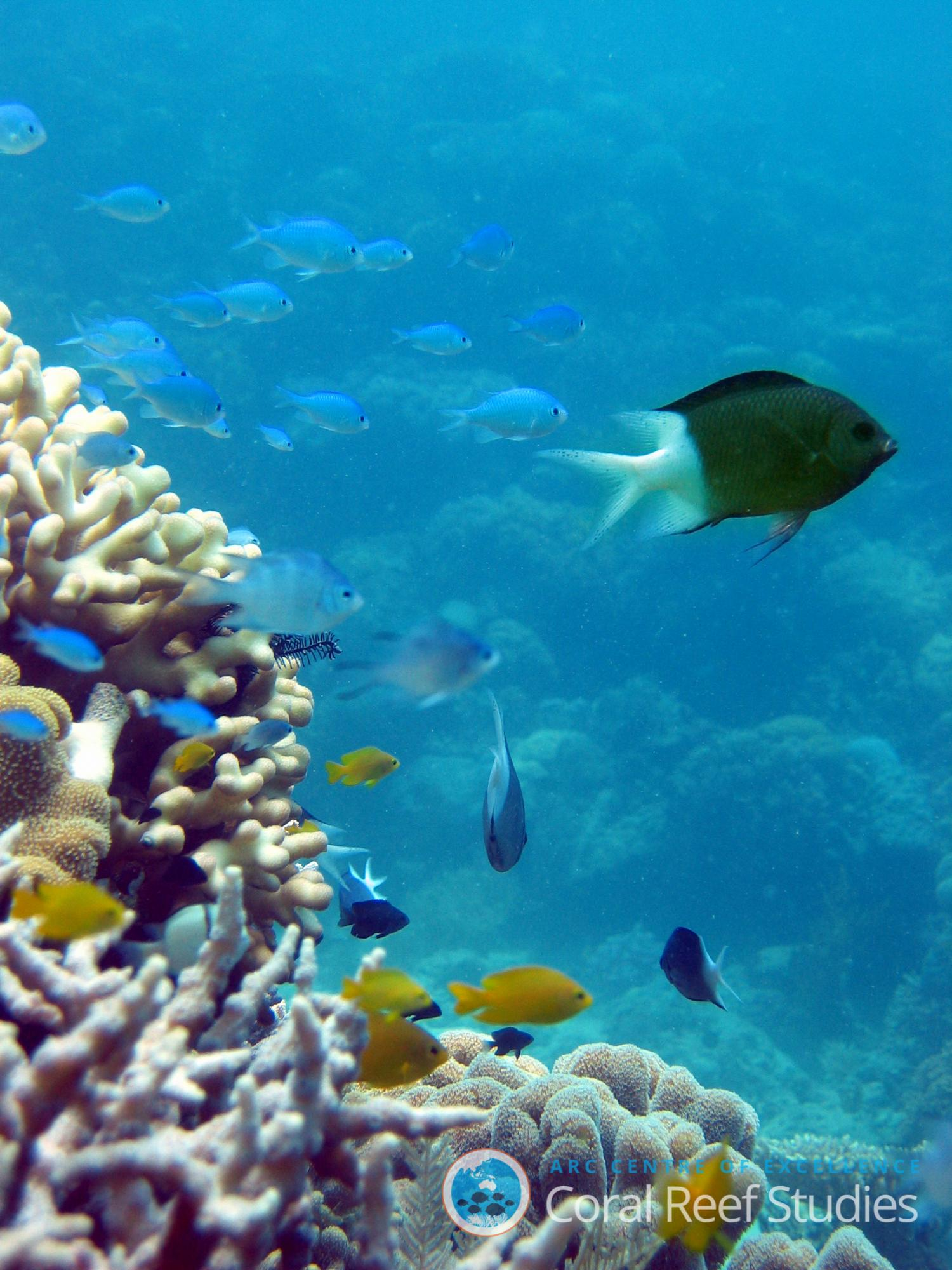 New research delivers hope for reef fish living in a high ...