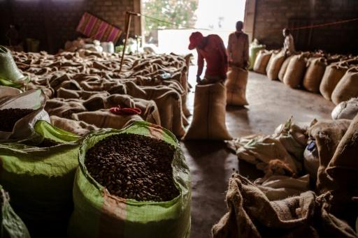 Climate imperils Ethiopia's coffee output: study