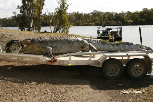 alligator single gay men Great-grandmother, 73, kills a 12-foot alligator with a single shot after it ate her miniature horse (and she now plans to eat it and make several pairs of boots from the 580lb catch) why is mario .