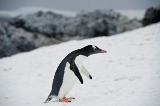 carbon dating live penguin