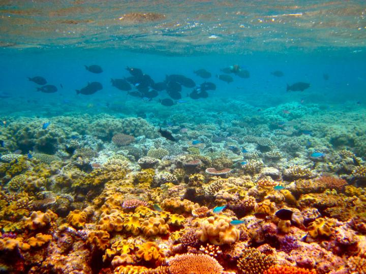 corals and fish relationship site