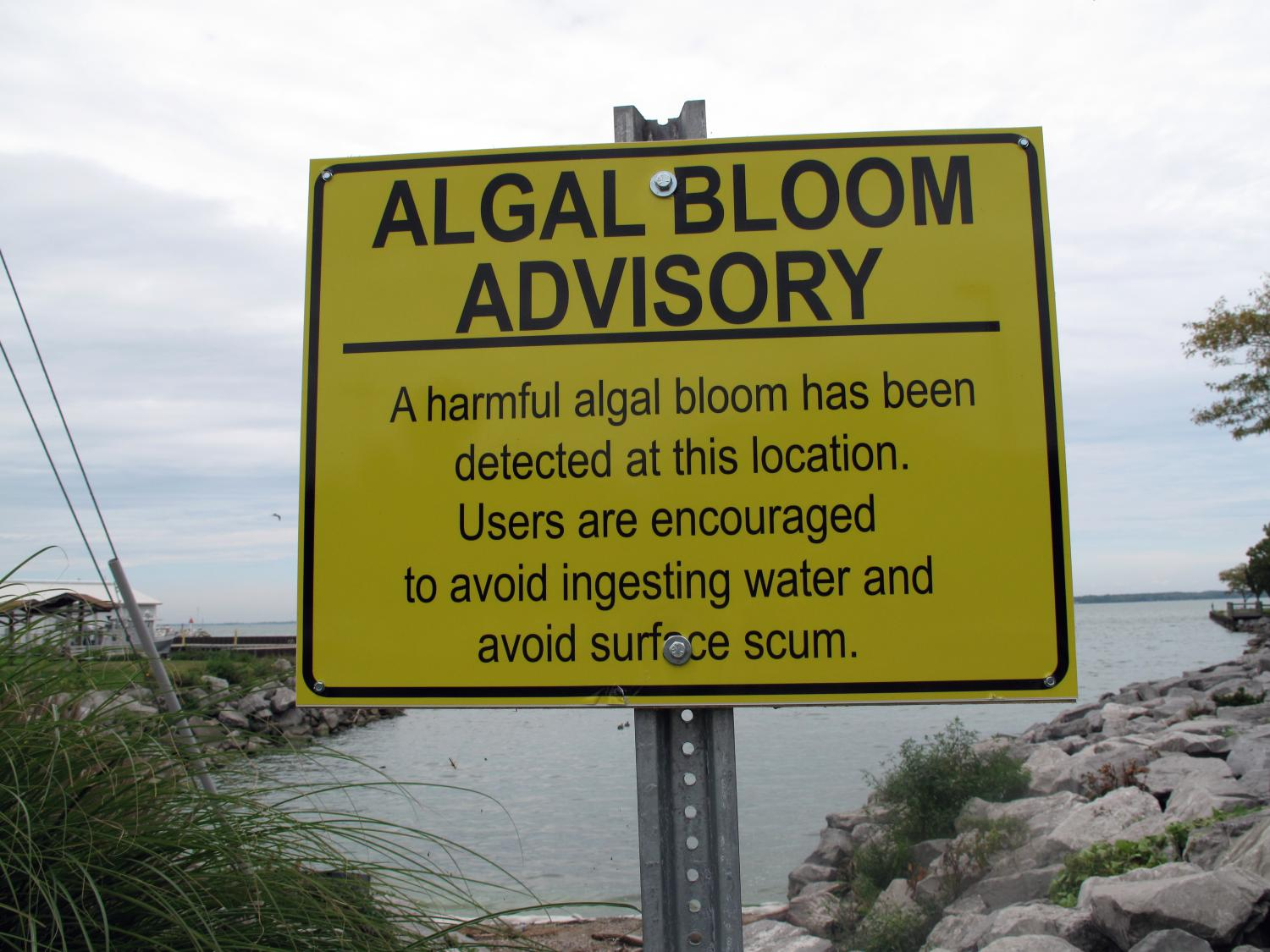 Algal blooms cost ohio homeowners 152 million over six years for Ohio fishing license 2017