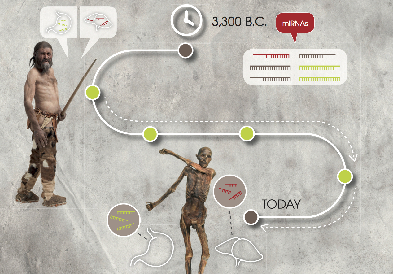 Otzi the Iceman: Researchers validate the stability of genetic markers