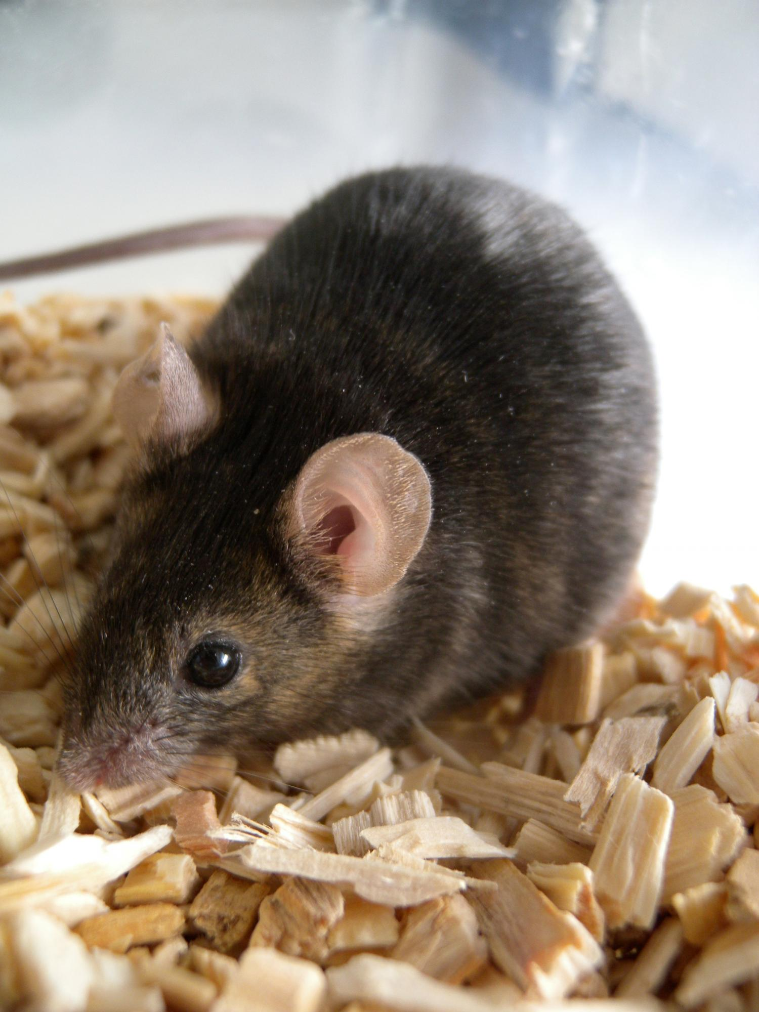How to Understand Gerbil Vocalizations forecast