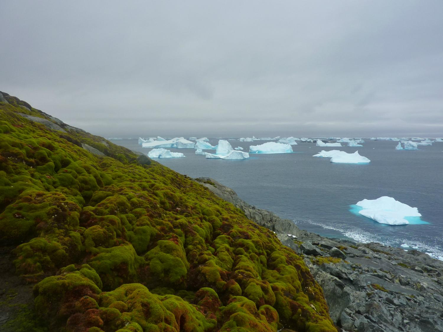 Global warming turning Antarctica green