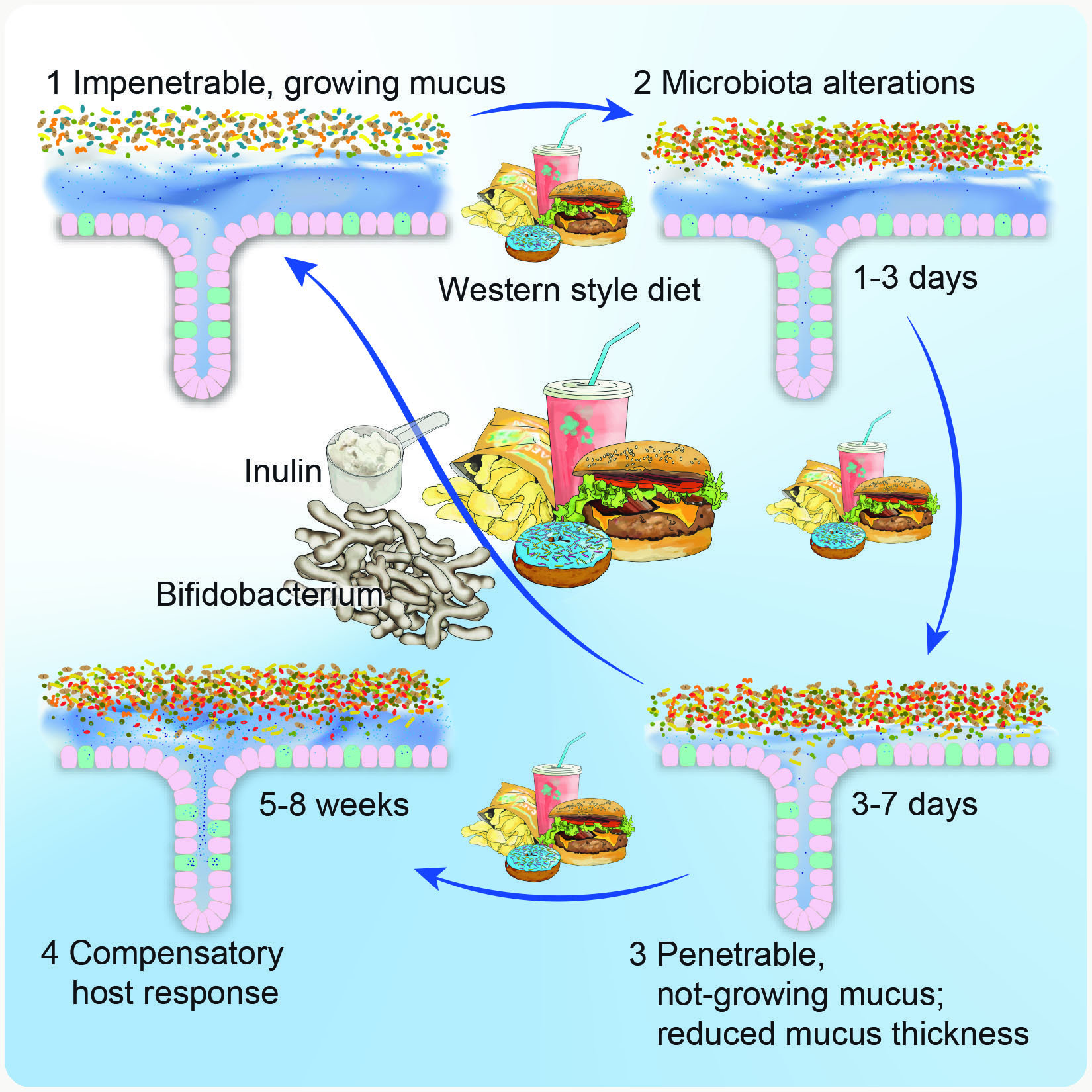 A Psa From Your Gut Microbes Enjoy The Holidays But Don T
