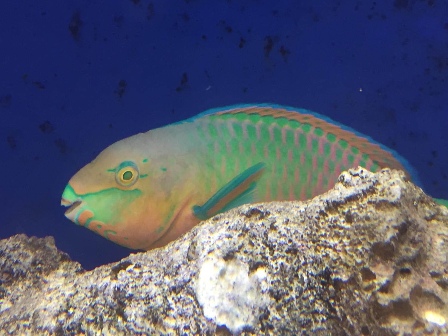 As fins evolve to help fish swim, so does the nervous system