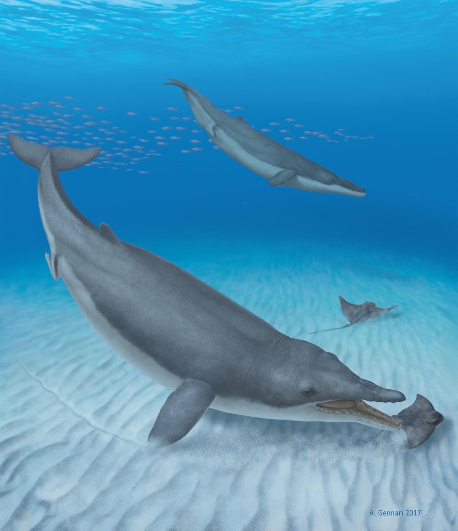Baleen Whales Ancestors Were Toothy Suction Feeders