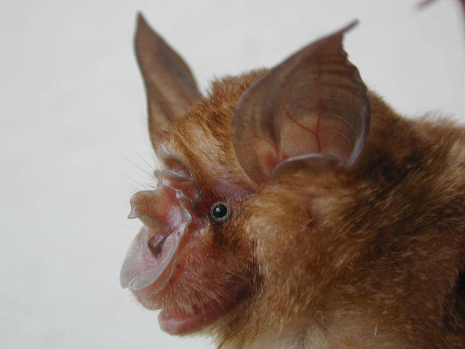 Bat cave study sheds new light on origin of SARS virus