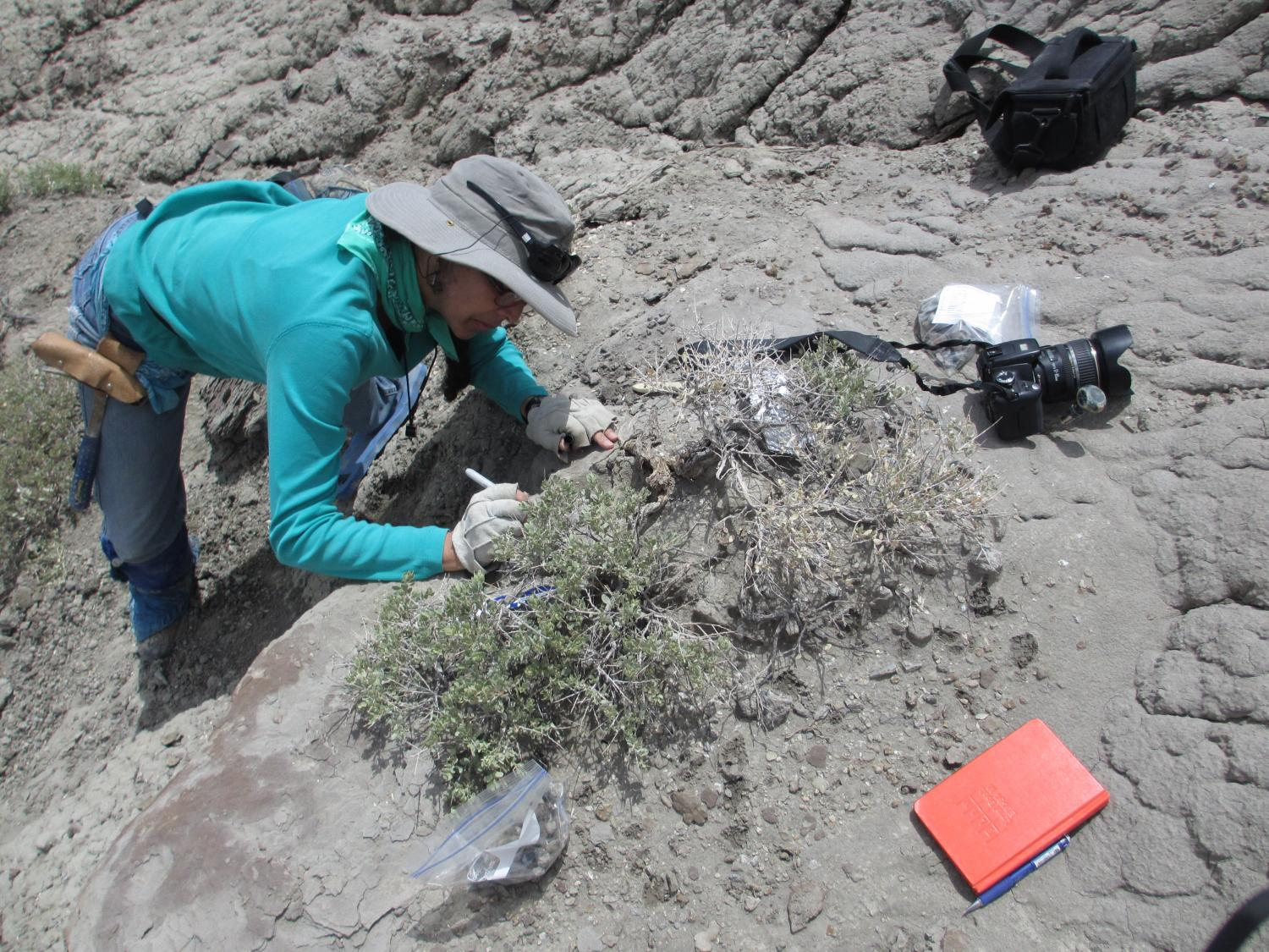 CU scientist: Some plant-eating dinosaurs also snacked on crustaceans
