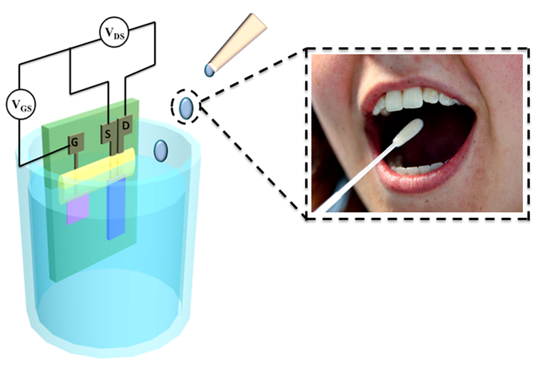 Biological Sensor Can Detect Glucose Levels In Saliva More