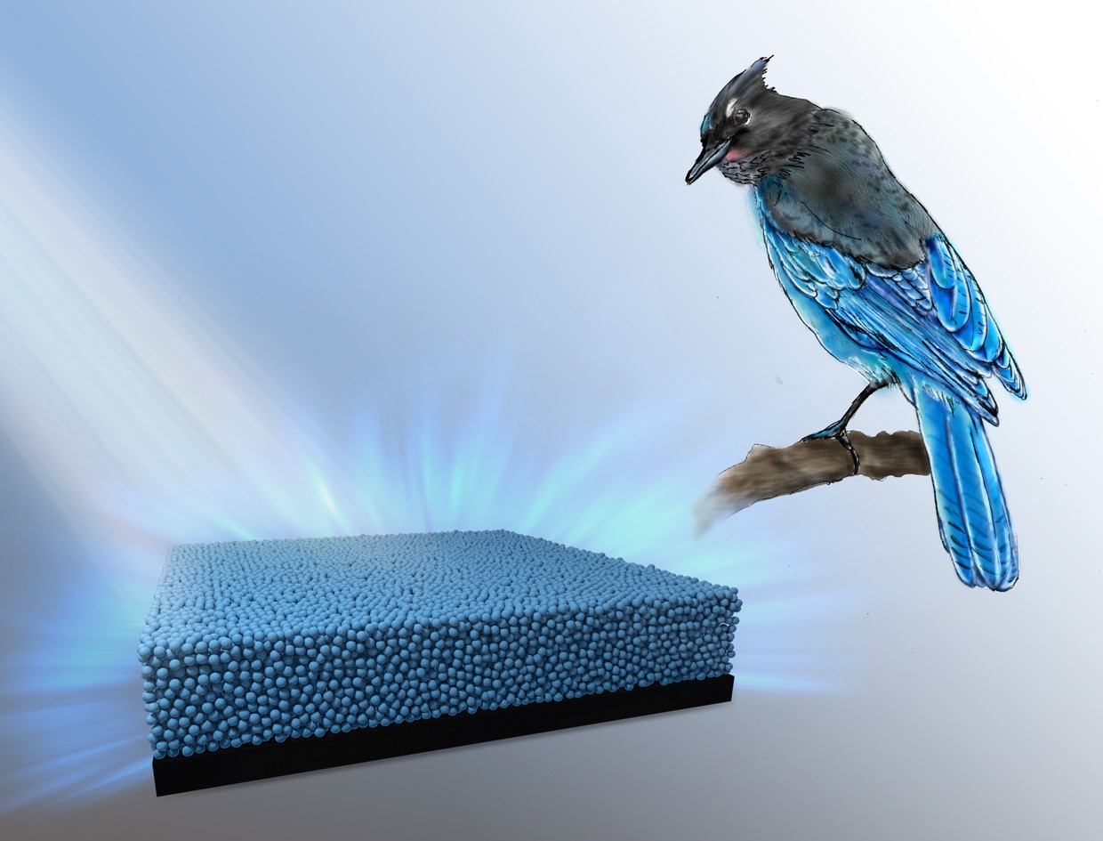 Bird Feathers Inspire Researchers To Produce Vibrant New