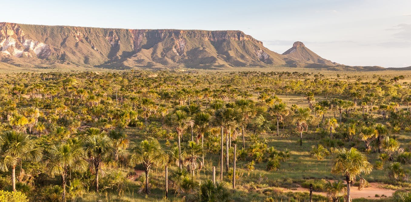 2017 12 Brazil Cerrado Forests Wont Corporate on Food Chains