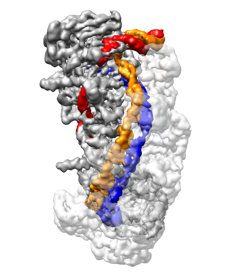 New study reveals key steps in CRISPR-Cas3 function at near-atomic resolution