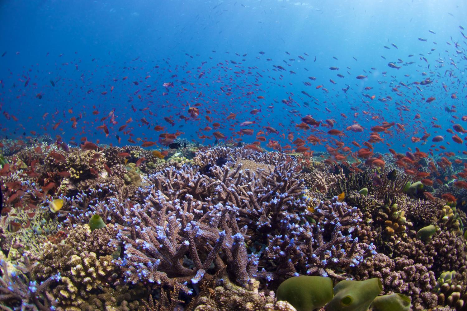 safeguarding coral reefs It is easy to see the impact of climate change on coral reefs in crystal clear waters but in sedimented waters like those surrounding singapore, the sight of dying corals is easier to miss.