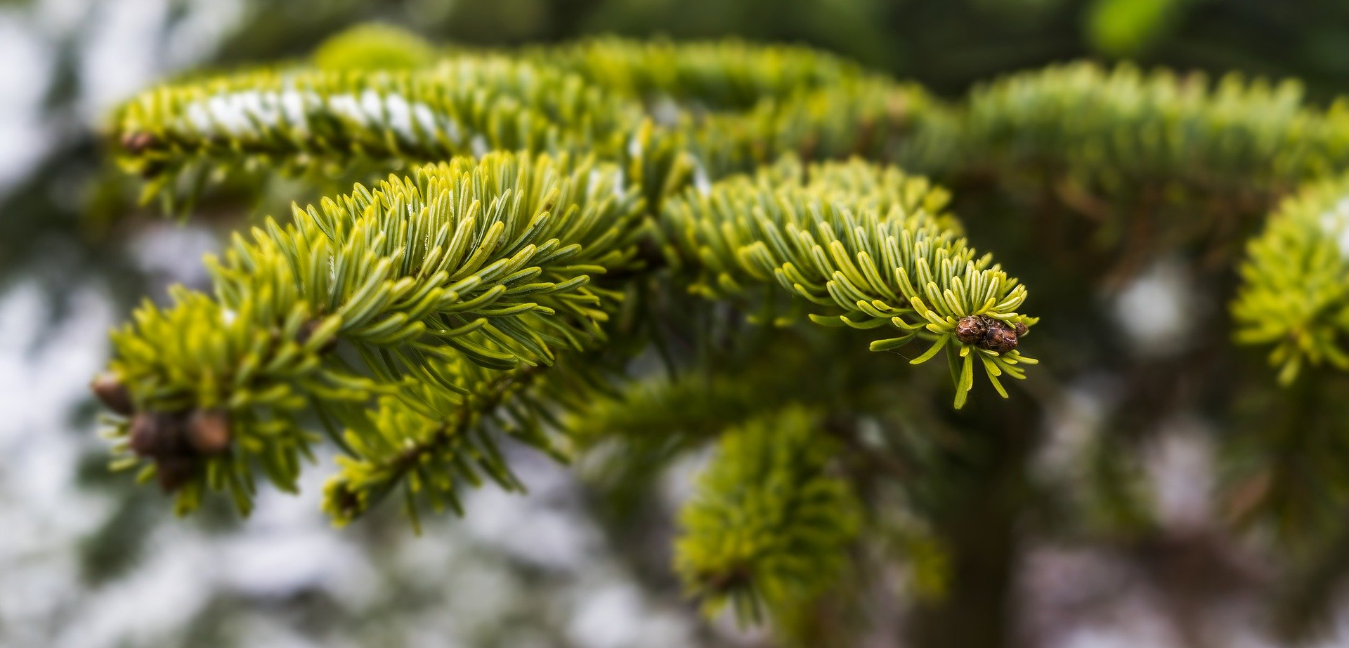 Are Real Or Artificial Christmas Trees Better For The Environment