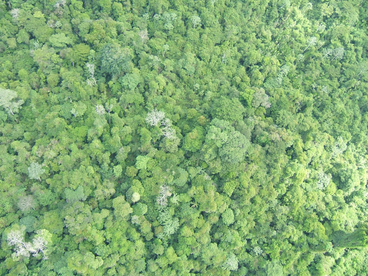 Climate policies alone will not save earths most diverse tropical climate policies alone will not save earths most diverse tropical forests freerunsca Choice Image