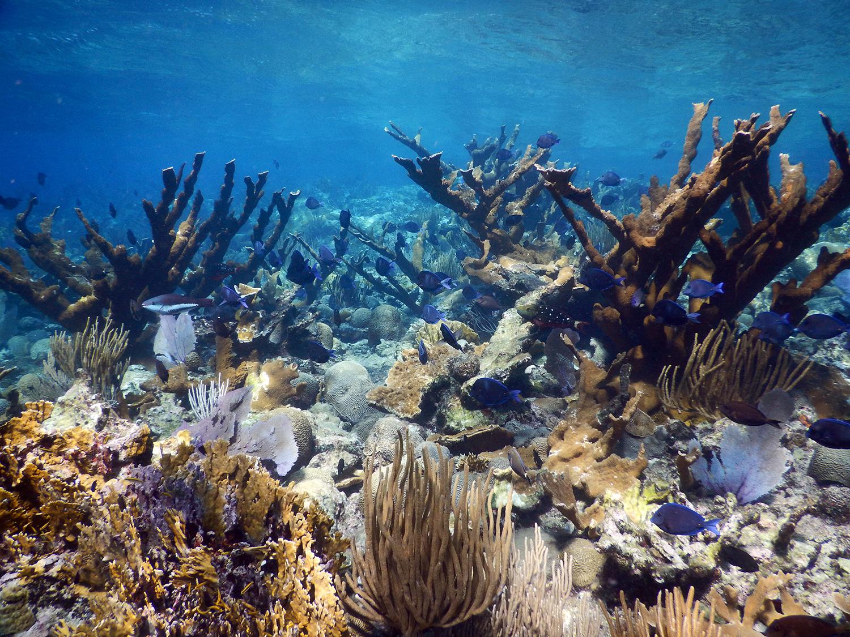 Virgin island coral reefs