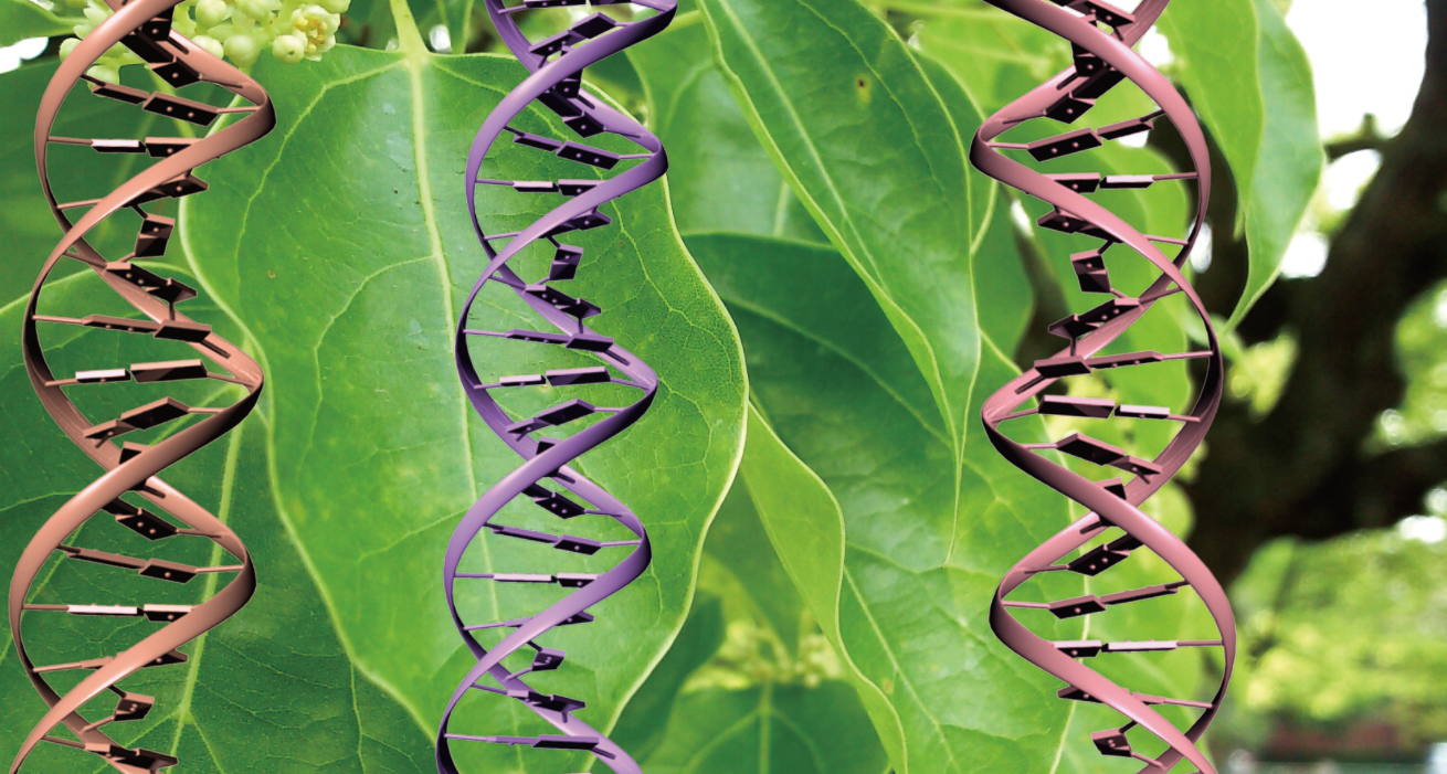 Disentangling chloroplast genetics: Scientists isolate a ...
