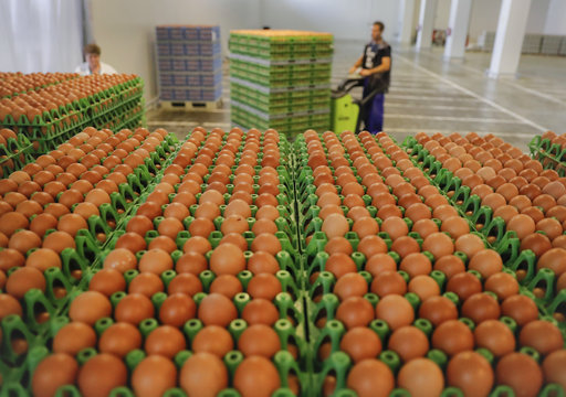 Countries are Affected by the Scandal with Fipronil Infected Eggs