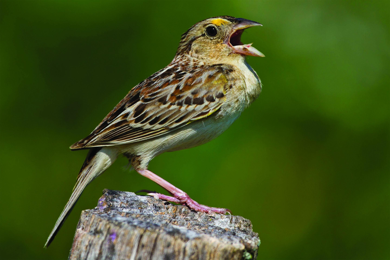 Rare Species Of Birds Extinction loom...