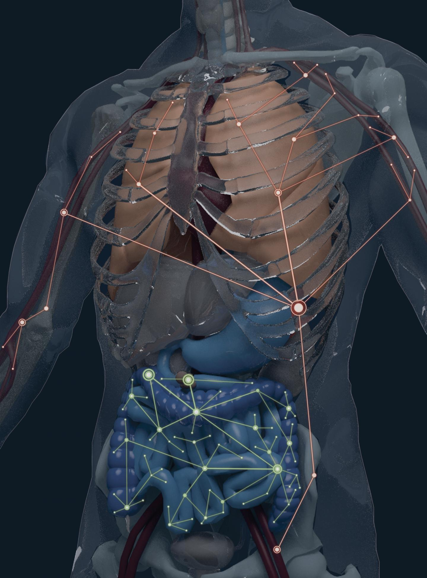 First Atlas Of B-cell Clones In Body Forms New Foundation
