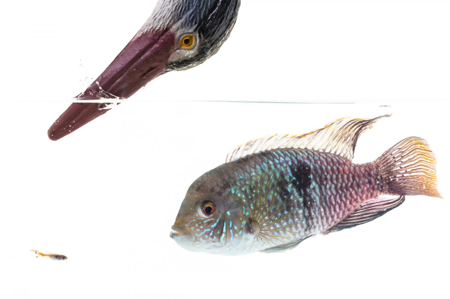 Scientists Found a Complex Personality in Fish