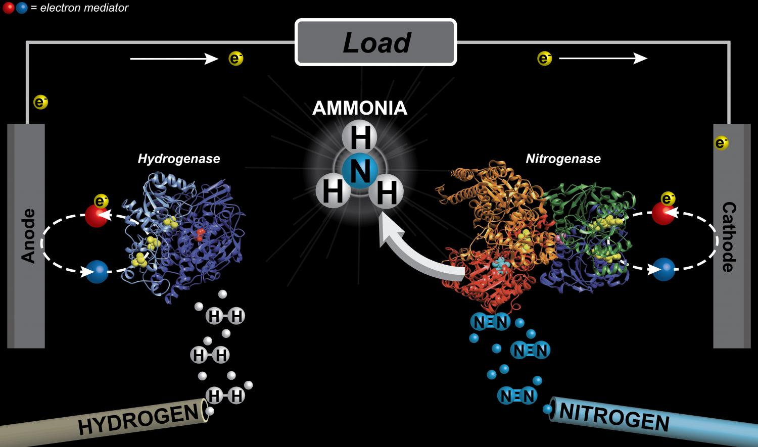 ammonia production Ammonia is critical in the manufacturing of fertilizers, and is one of the largest-volume synthetic chemicals produced in the world this article explores the evolution of ammonia production and describes the current manufacturing technologies.