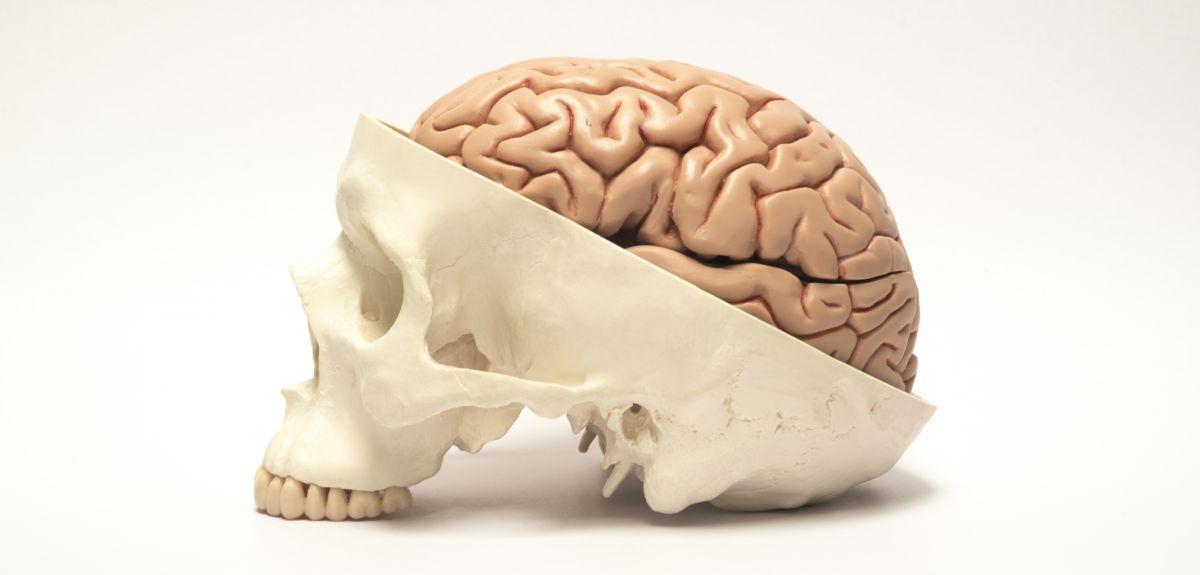 Geometry, skull growth and brain mechanics