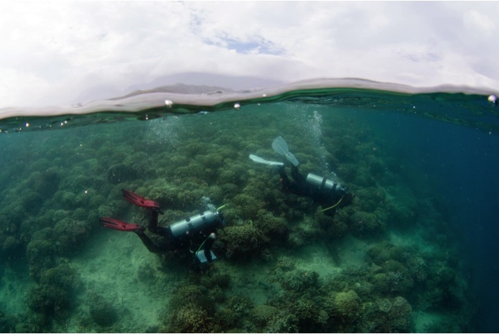 hawai i researchers receive funds to forecast coral disease across