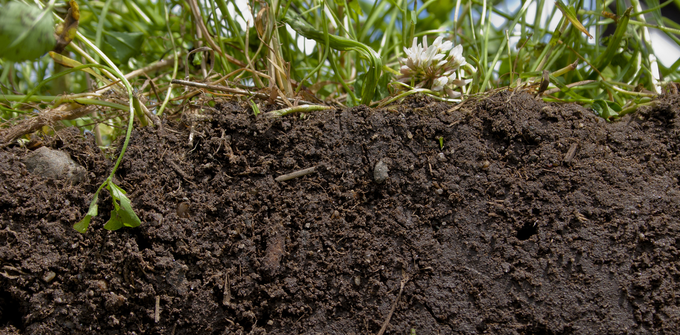 Image result for Healthy soil is the real key to feeding the world