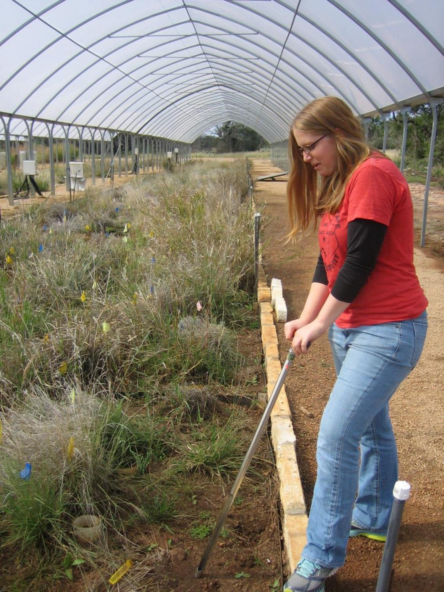 Historical rainfall levels are significant in carbon emissions from soil