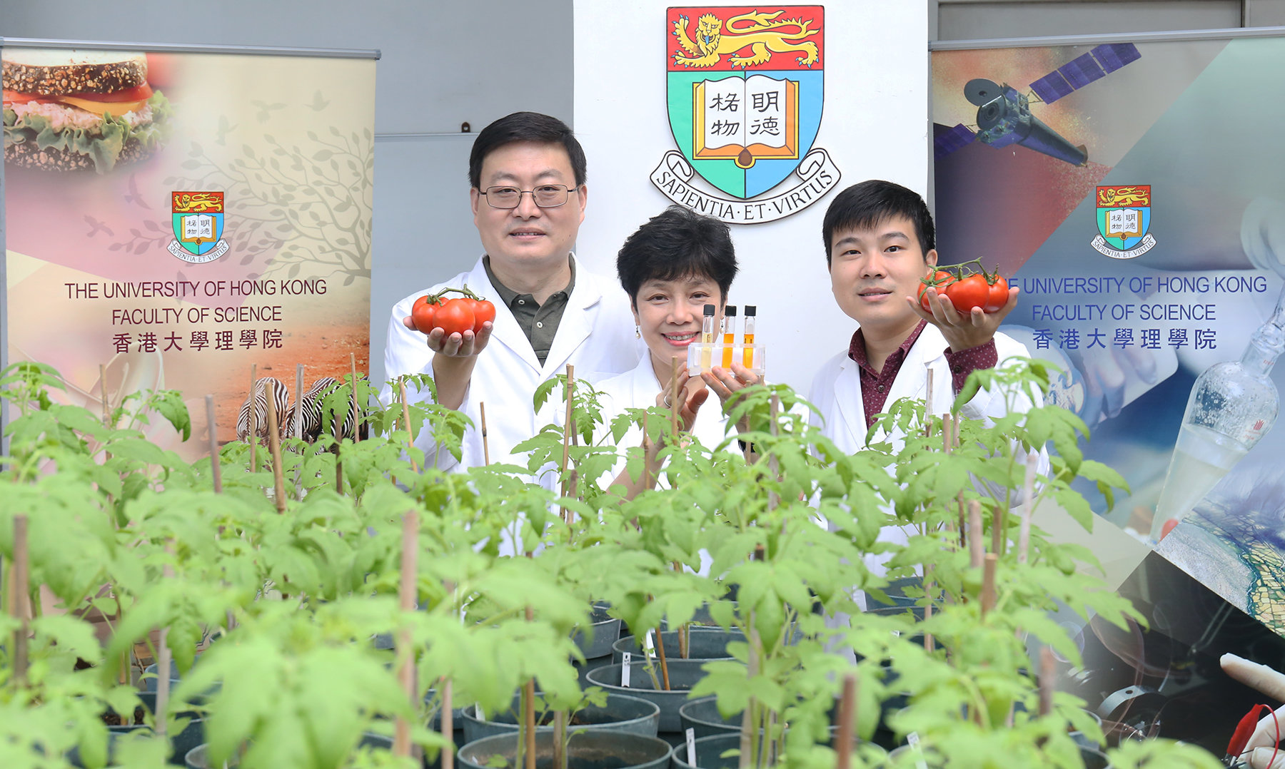 Researchers Generate Tomatoes With Enhanced Antioxidant Properties Prune Diagram Of Tomato Plant From Left Dr Wang Mingfu Professor Chye Mee Len And Liao Pan Show Tubes Containing Carotenoid Extracts S359a Fruits The Control