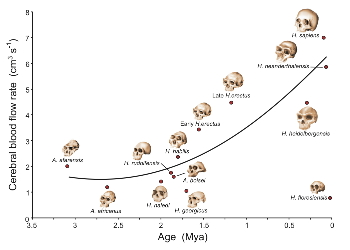 brain evolution in the human species How has the human brain evolved the species of the toward other regions of the brain the final third of our evolution saw nearly all the.