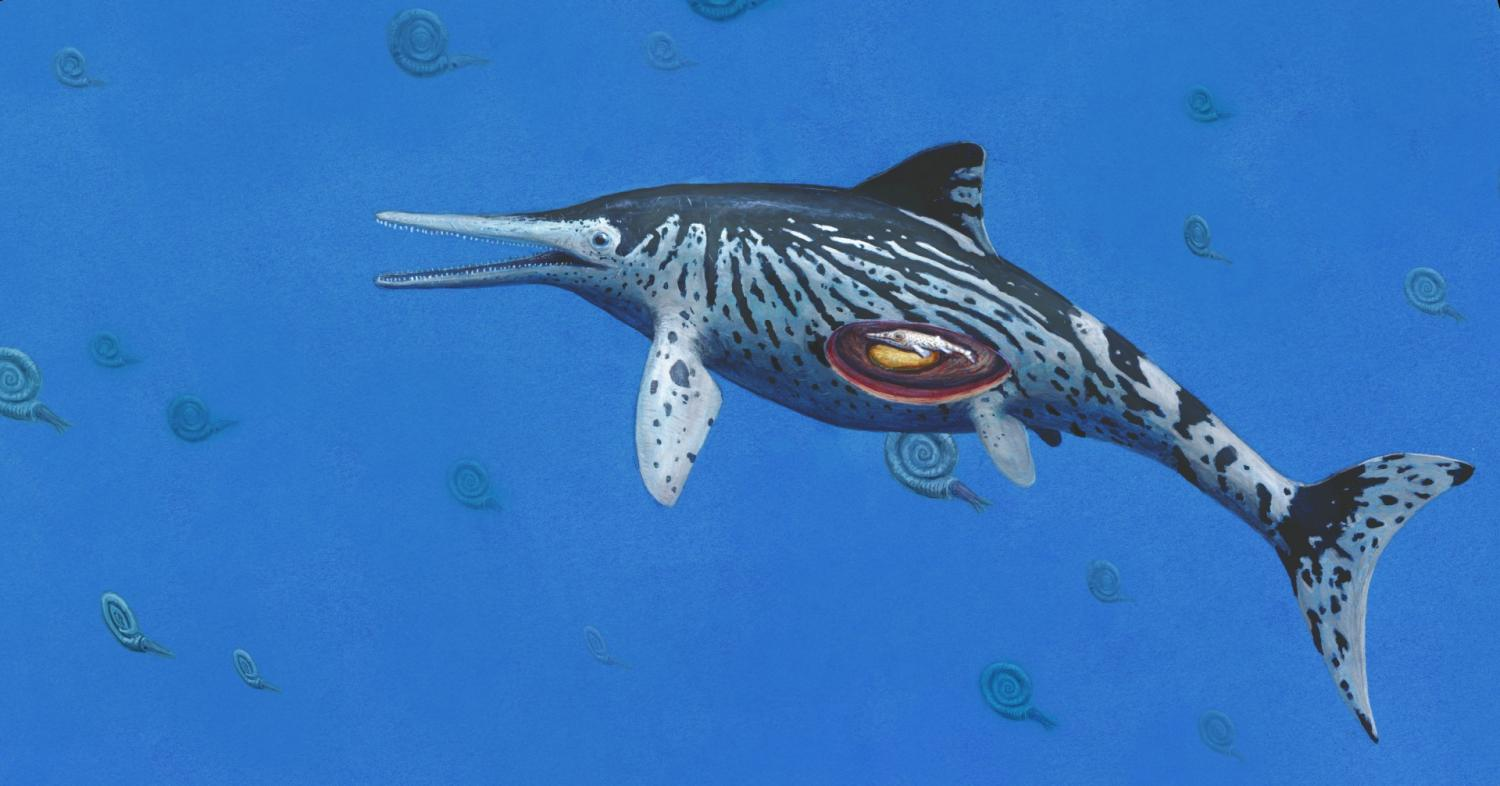 Largest Ichthyosaurus was pregnant at time of death
