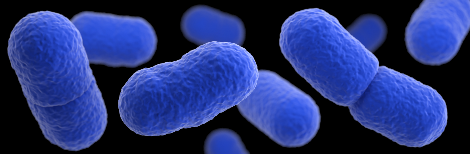 Listeria Monocytogenes The Common Food Borne Bacteria Depicted In This Illustration Based On Electron Microscope Imagery Can Cause Miscarriage