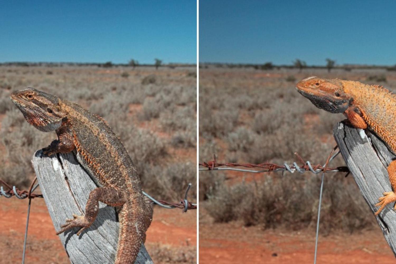 lizardskeepi.jpg