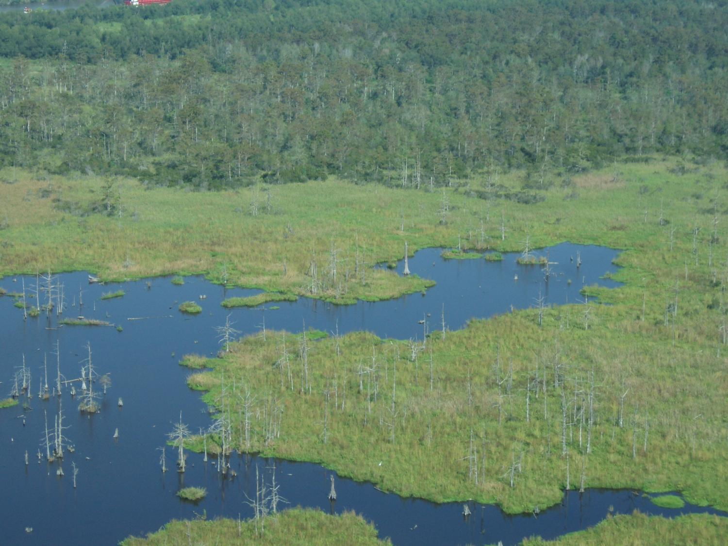 Louisiana Wetlands Struggling With Sea Level Rise Four Times The
