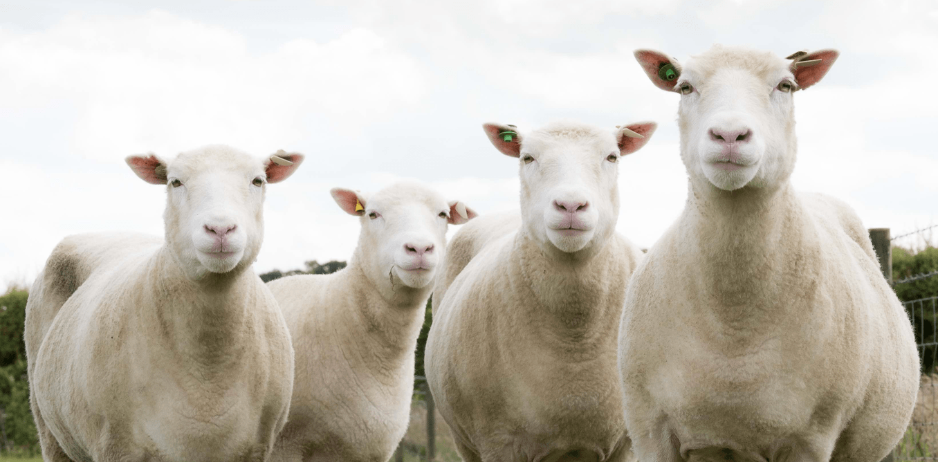 More lessons from Dolly the sheep—is a clone really born