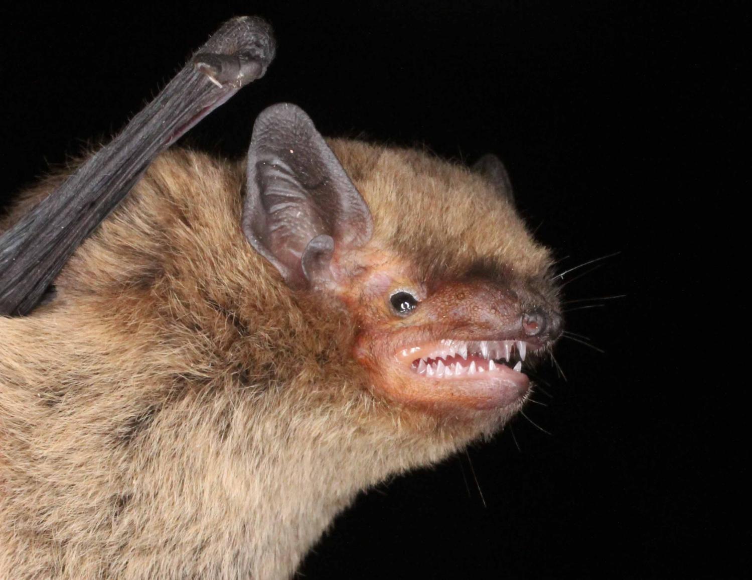 Bats 72
