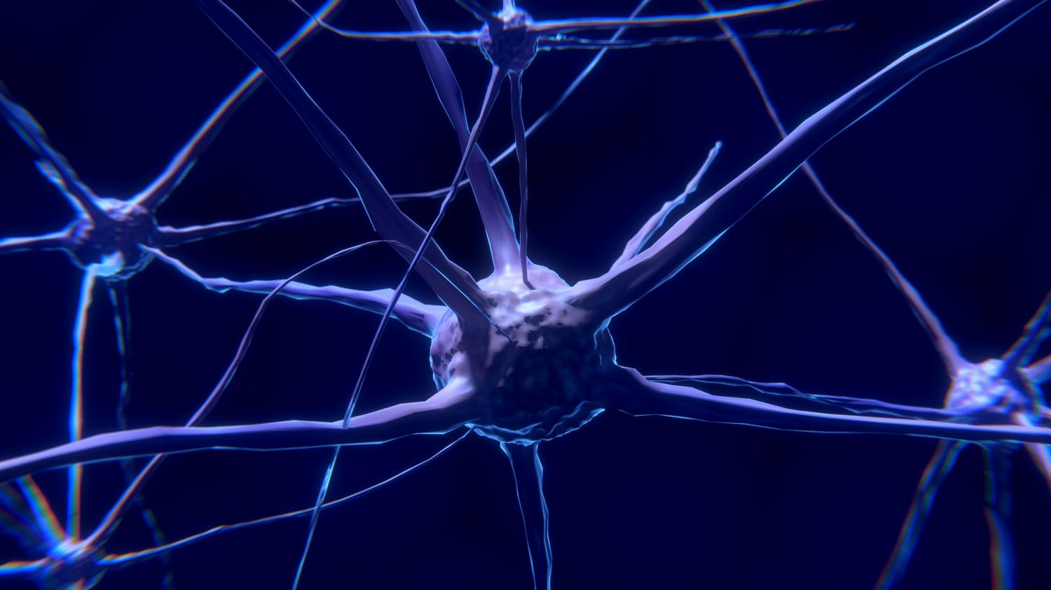 Research Gives New Insight Into The Evolution Of The Nervous System