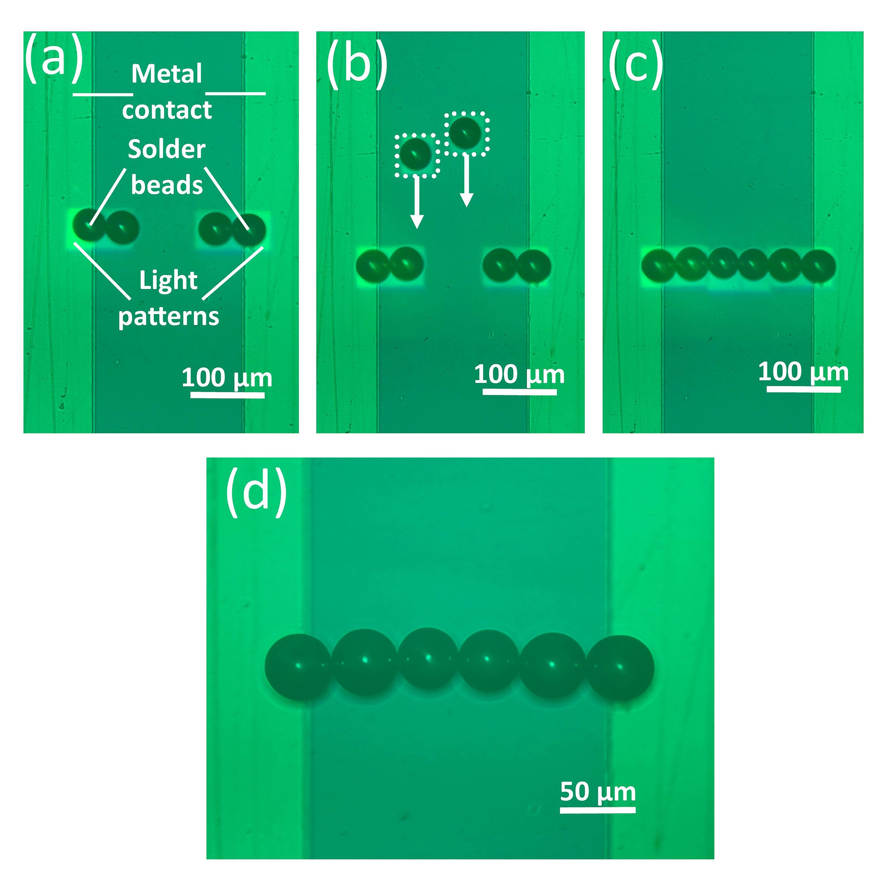 Researchers used optoelectronic tweezers to assemble a line of solder  beads. By removing the liquid with a freeze-drying approach, the assembled  beads stay ...