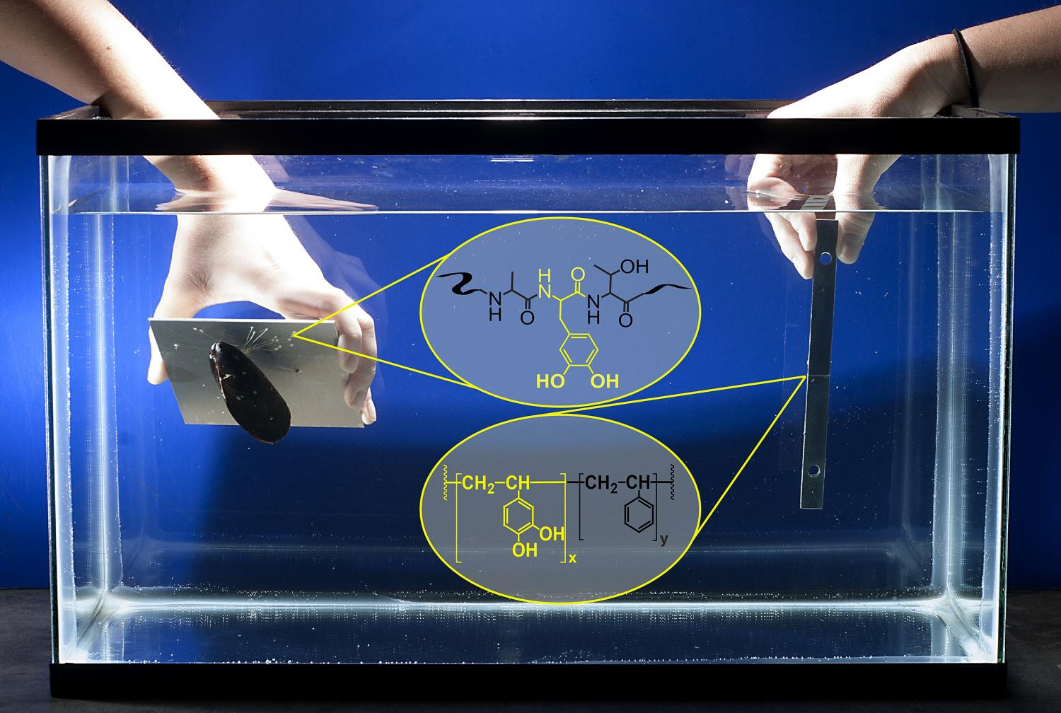 New Biomimetic Glue Shows High Strength Bonding Under Water