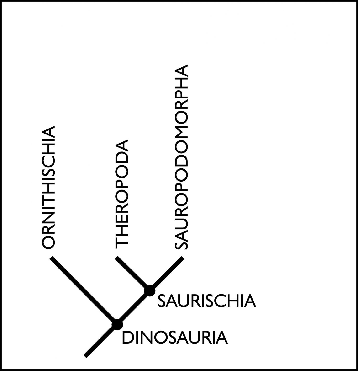 New Study Shakes Up The Roots Of The Dinosaur Family Tree
