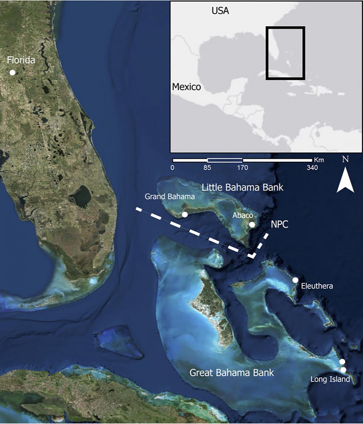 Channel in bahamas marks genetic divide in brazilian free tailed bats ocean channel in bahamas marks genetic divide in brazilian free tailed bats sciox Gallery