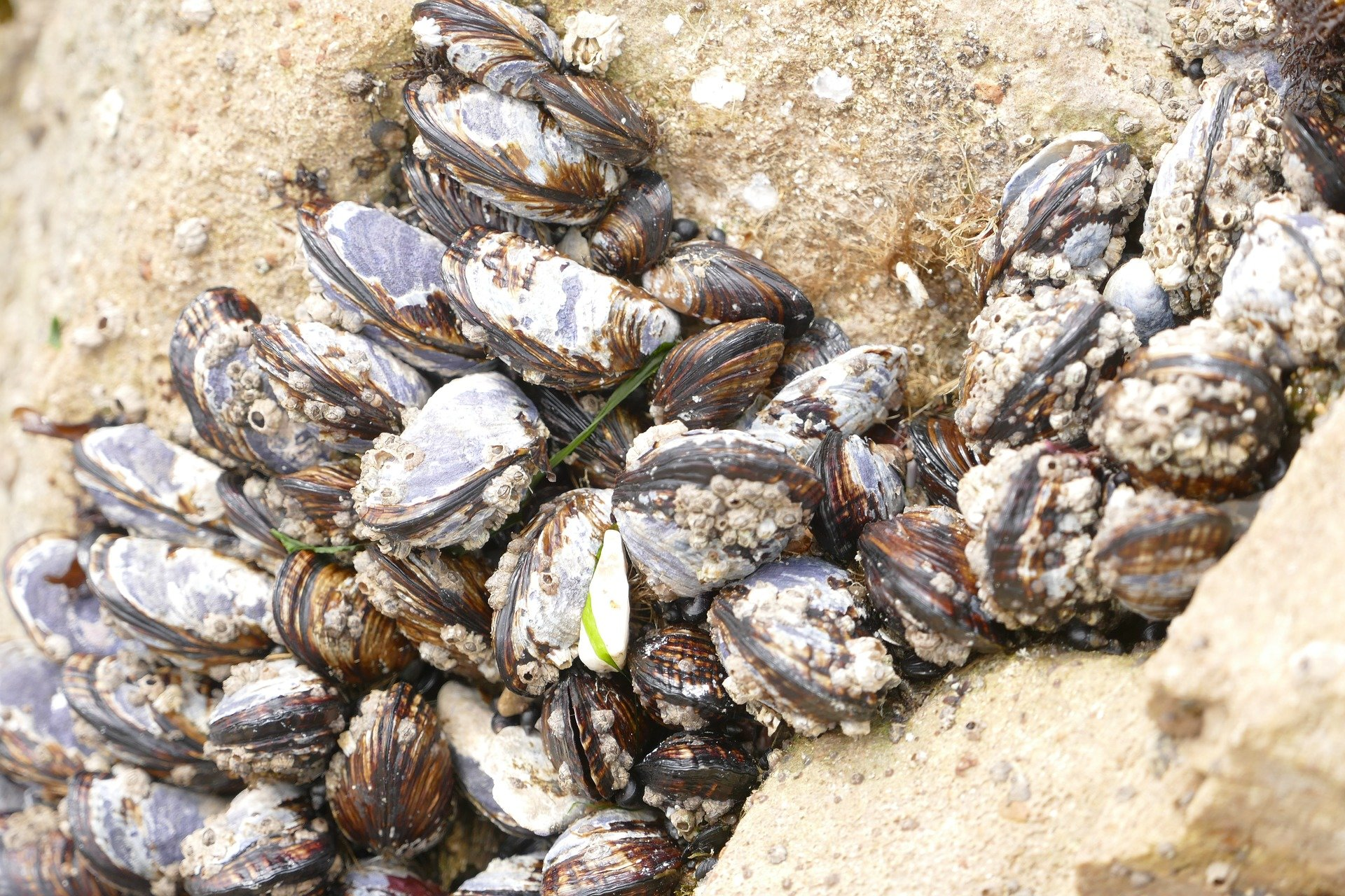 Gas Around Me >> Baltic clams and worms release as much greenhouse gas as ...