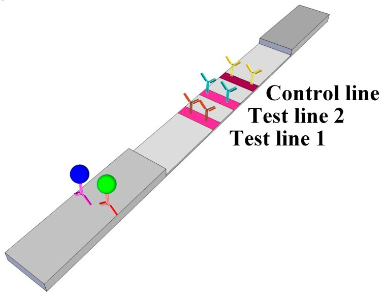 Paper test strip could help heart failure patients monitor their ...